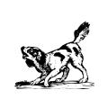 Dogs Dog 10