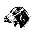 Dog 15