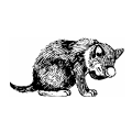 Cats Cat 5
