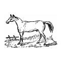 Horses Horse 3