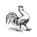 Chickens Chicken 3