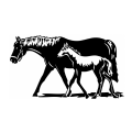 Horses Horse 5
