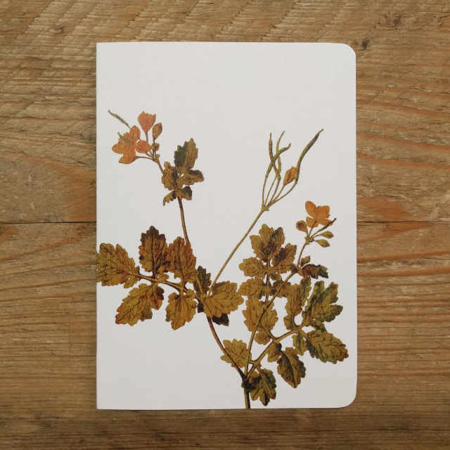 Personalised Stationery : Plain : Sprig
