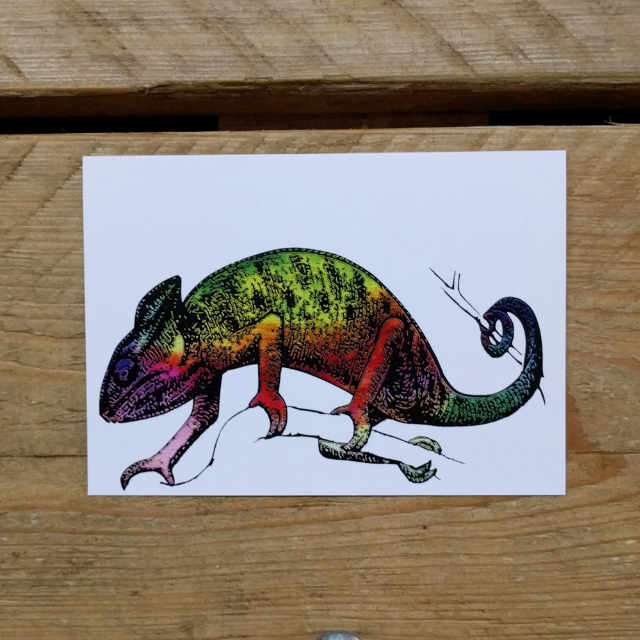 Personalised Stationery : A6 Note Card : Kameleon