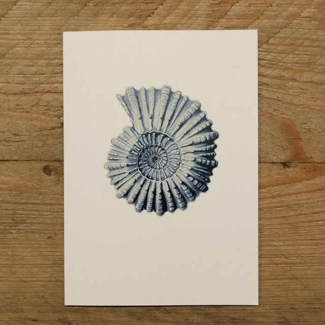 Personalised Stationery : A6 Note Card : Mollusca