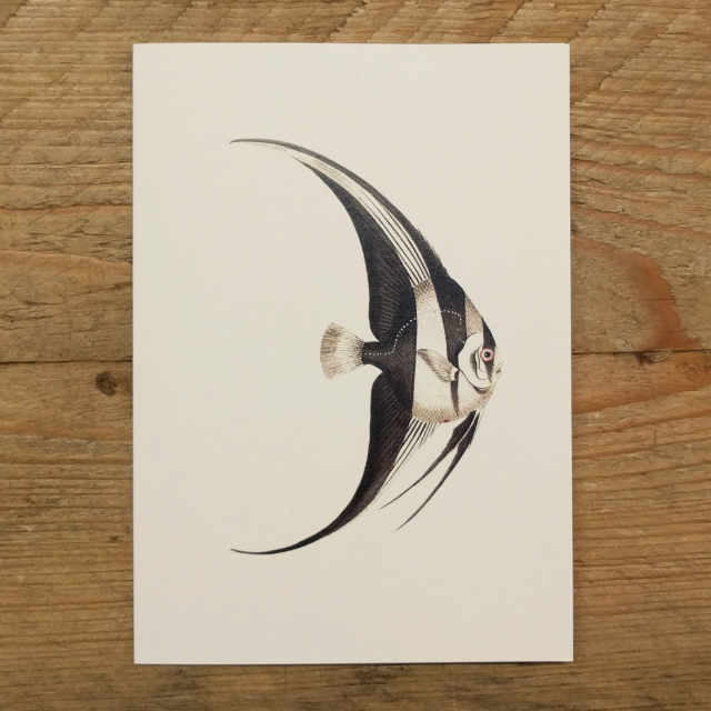 Personalised Stationery : A6 Note Card : Platax