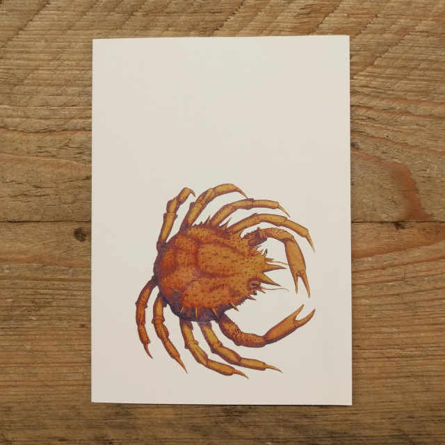 Personalised Stationery : A6 Note Card : Pugettia