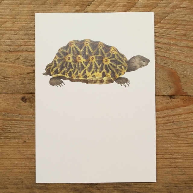 Personalised Stationery : A6 Note Card : Terrapene