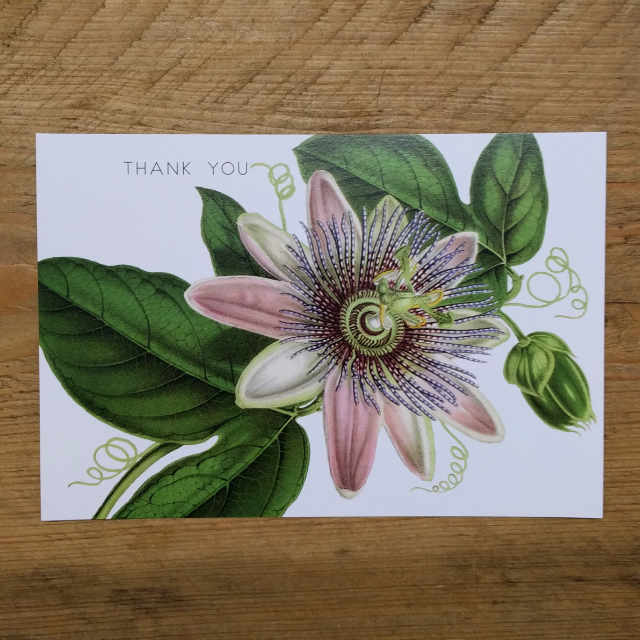 Personalised Stationery : Demi Quarto Postcard : Pink Clematis