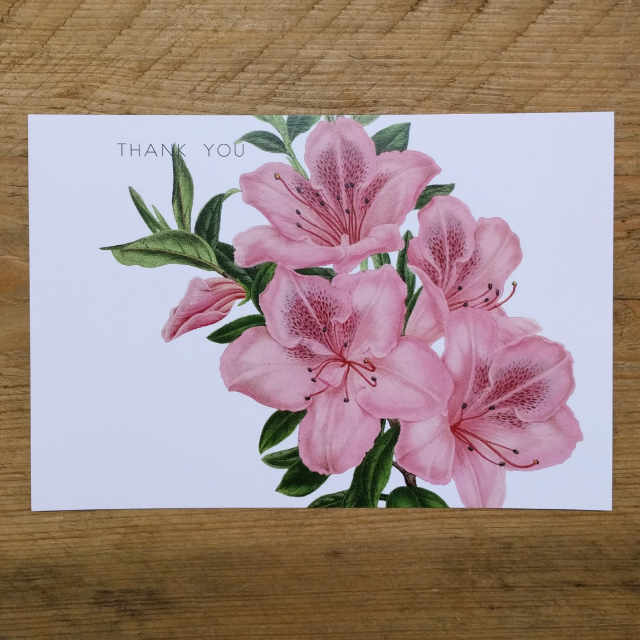 Personalised Stationery : Demi Quarto Postcard : Pink Lily