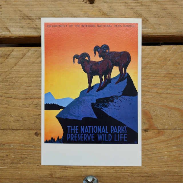 Personalised Stationery : Demi Quarto Postcard : NPS