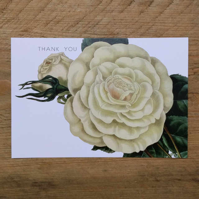 Personalised Stationery : Demi Quarto Postcard : White Rose